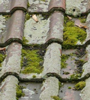 Que faire lorsque la mousse s'attaque à votre toiture en ardoises?
