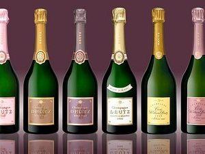 variété de bouteilles de champagne