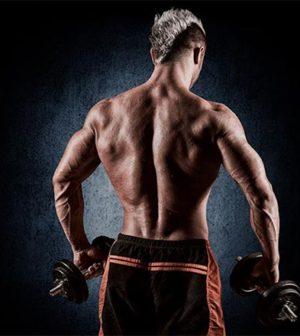 les muscles à protéger en musculation