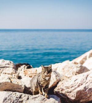 chat proche de la mer