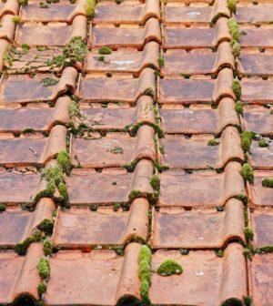 Un démoussage régulier pour une toiture protégée