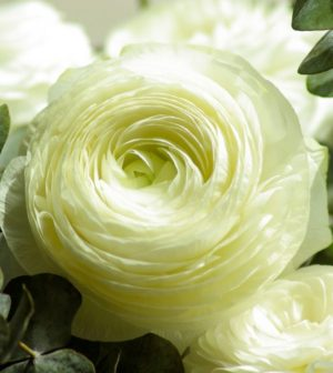 secondflor, fleurs et mousse stabilisée