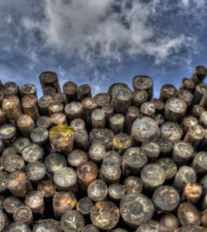 Le bois: le matériau idéal pour nos maisons?