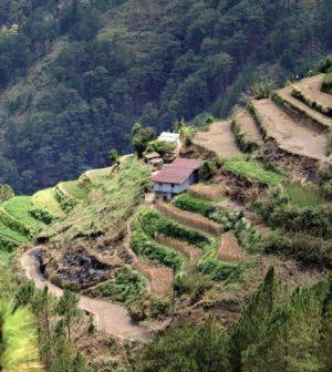de grandes terrasses dans les philippines