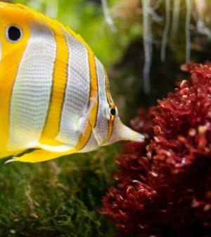 Quel filtre pour mon aquarium ?