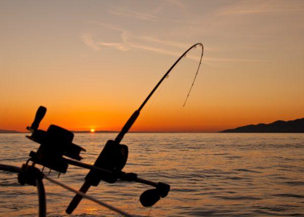 canne à pêche télescopique