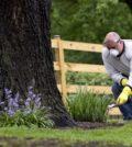 se débarrasser des insectes nuisibles