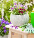 fertilisant biologique