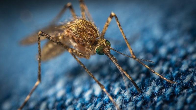 nid de moustiques